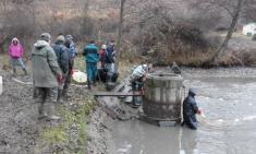 Výlov rybníků Smederov 2016